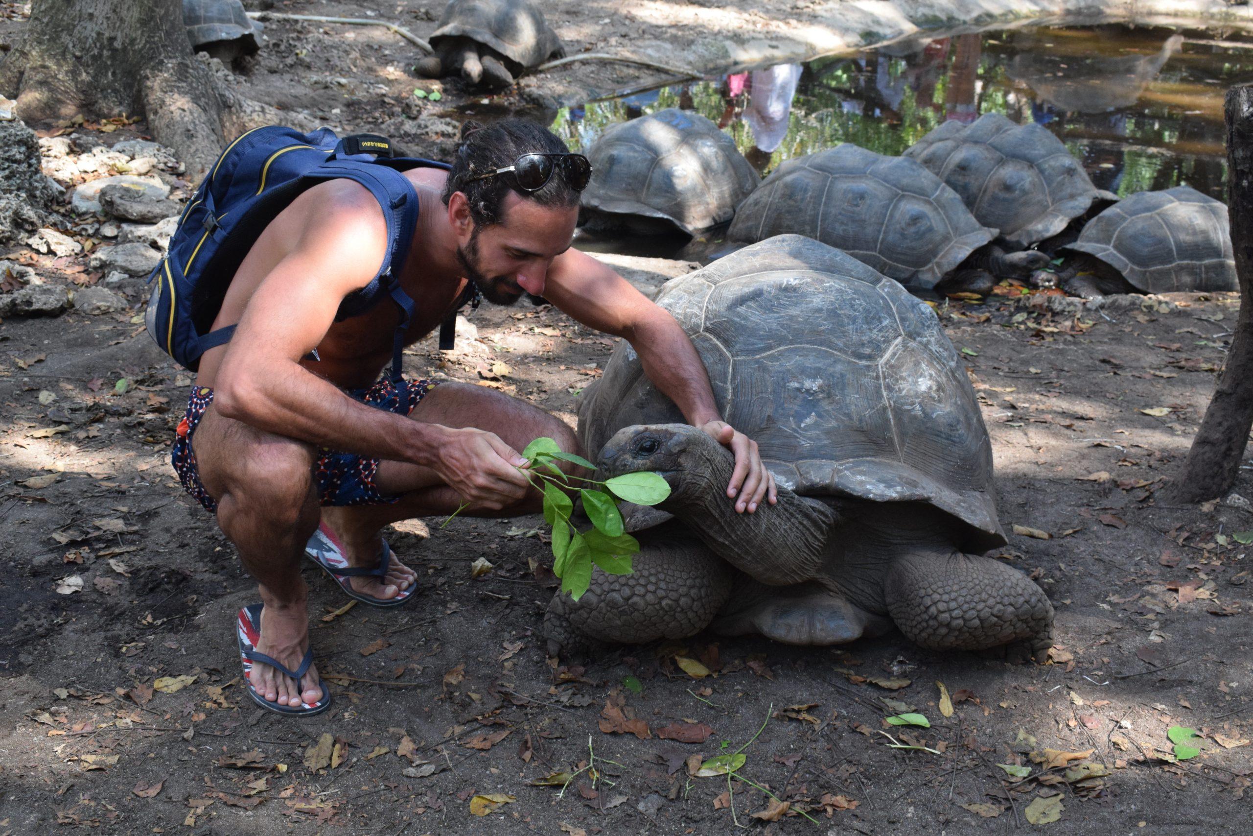 Dar da mangiare alla tartaruga gigante