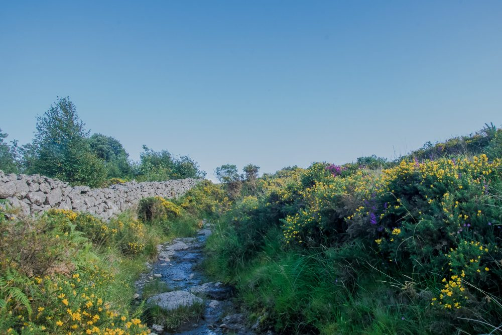 Dartmoor, campeggio